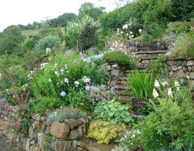 Plants Steps